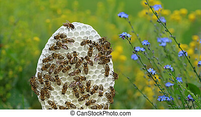 round white honeycomb with bees on yellow and blue flowers background