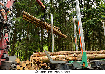 round wood are loaded onto a timber transport - Forestry...