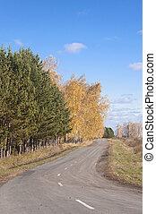 route, automne, asphalte