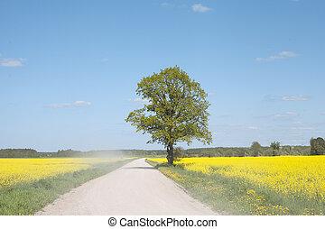 route, dans, les, canola, field.