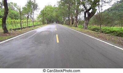 route, forêt, conduite