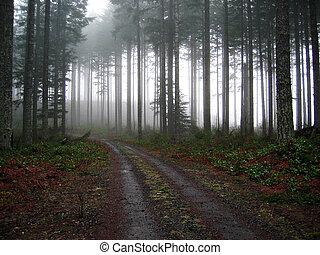 route gravier, dans, les, brouillard