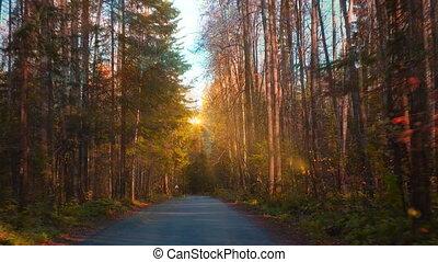 route, promenade, automne, vidéo, forêt, long, boucle