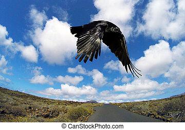 route, silhouette, lanzarote, voler, -, canari, espagne, oiseau, îles, nulle part