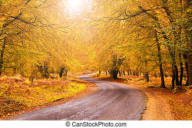 Route through orange and golden trees in the New Forest in late autumn