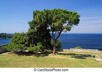 Rovinj Pine 01