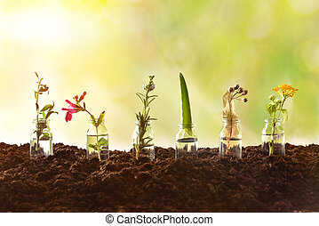 Row jars with plants inside on soil and nature background