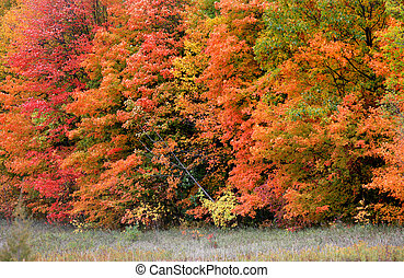 Row of autumn trees