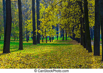 Row of Autumn Trees with Yellow Leaves