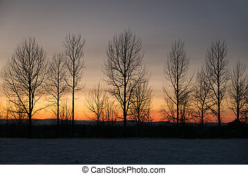 Row of bare trees against winter sunset sky