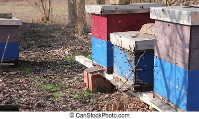 Row of beehives at early spring in orchard, apiary, Bee farm...