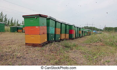Row of beehives on the pasture, apiary, Bee farm