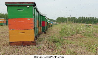 Row of beehives on the pasture, apiary, Bee farm - Wooden...