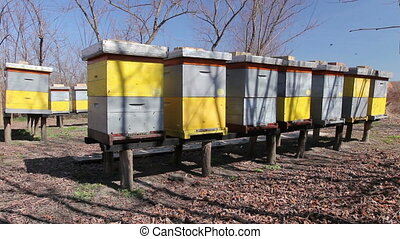 Row of beehives on wooden pillars lifted up, apiary, Bee...