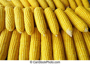 row of boil corn in the market