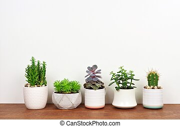 Row of cacti and succulents in pots on wood shelf against white wall