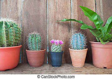 Row of cactus plants on wooden table, Home garden