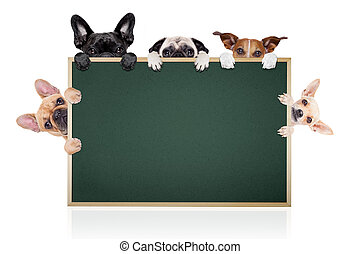 group row of different dogs behind a blank banner placard blackboard, isolated on white background