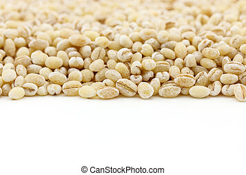 dried peeled barley seed with copy space on white background