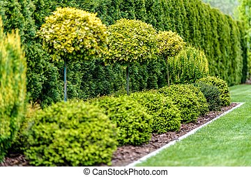 Row of Garden Trees