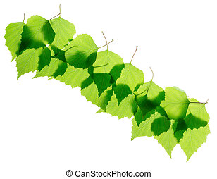 Row of green birch leaves