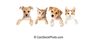 Row of puppies and kittens over blank banner - Row of cute...