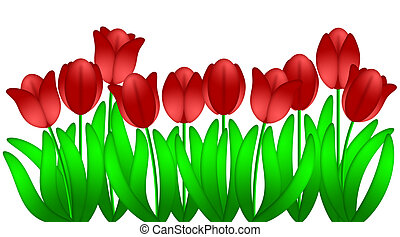 Row of Red Tulips Flowers in Spring Illustration Isolated on White Background