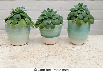 Row of succulent plants on a white desk