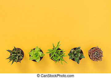 Row of succulent plants on yellow background
