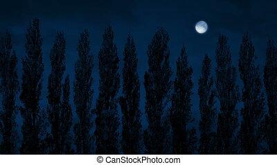 Row Of Tall Trees Sway At Night