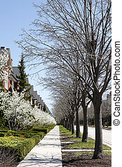 Row of townhouses and trees in spring