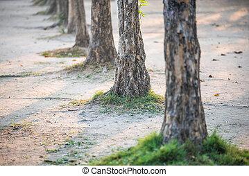 row of tree