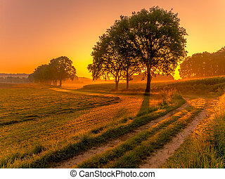 Row of trees at sunrise