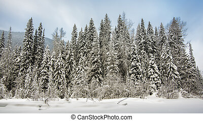Row of Trees Covered in Snow