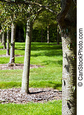row of trees in an english country garden
