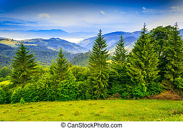 row of trees in mountains - row of trees on the edge of a...