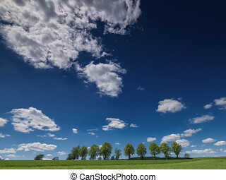 Row of trees in the field with view towards the clouds, trees in the field with clear clouds and blue sky, TREES IN THE FIELD WITH VIEW TO HEAVEN