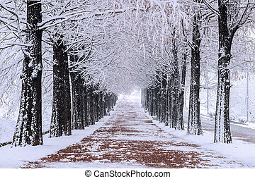 Row of trees in Winter with falling snow.