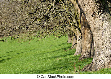 Row of trees on a meadow