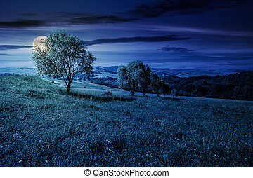 row of trees on grassy slope at night in full moon light....
