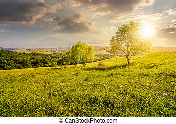 row of trees on grassy slope at sunset. lovely countryside...