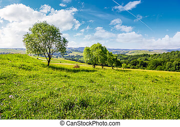 row of trees on grassy slope