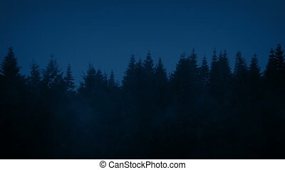 Row Of Trees On Misty Night - Mist moving over trees in the...