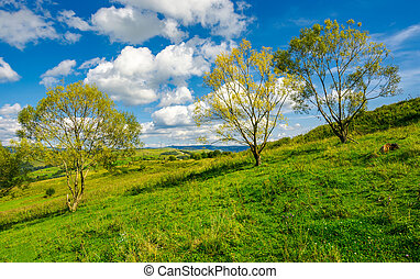 row of trees on the grassy slope. warm autumn weather with...