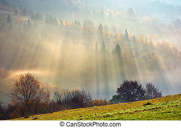 row of trees on the meadow in morning fog