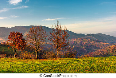 row of trees with red foliage on a grassy slope. beautiful...