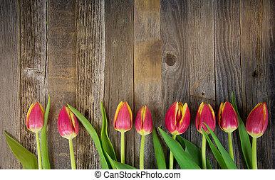 row of tulips on wood