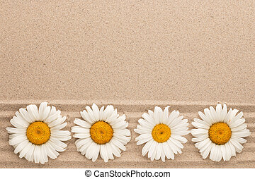 Row of white daisies lying on sand lines, with space for text.