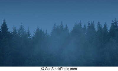 Row Of Wilderness Trees In The Evening - Row of cedar trees...