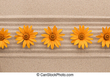 Row of yellow daisies lying on sand lines.